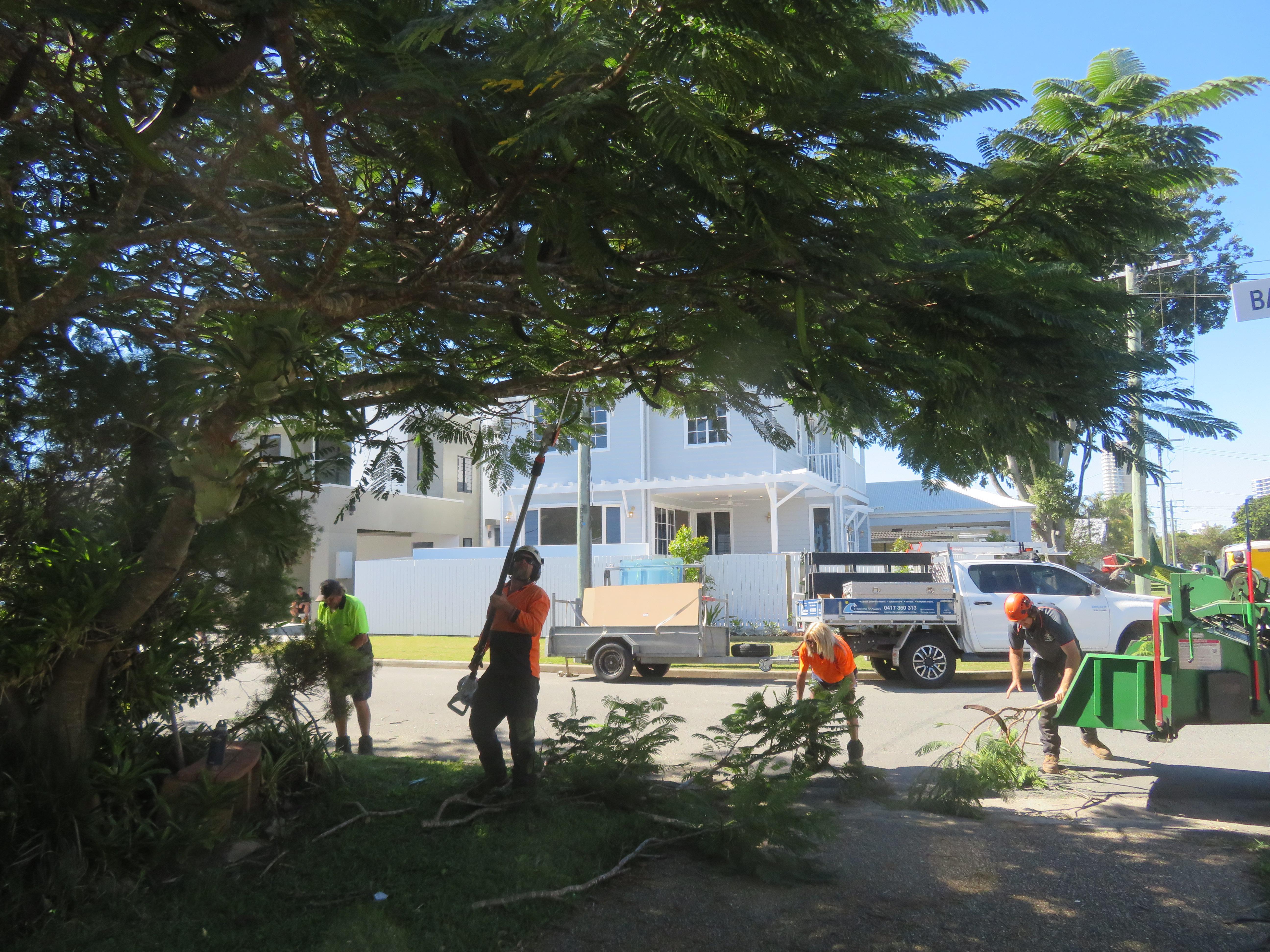 big jim pruning trees august flowers 001_5184x3888