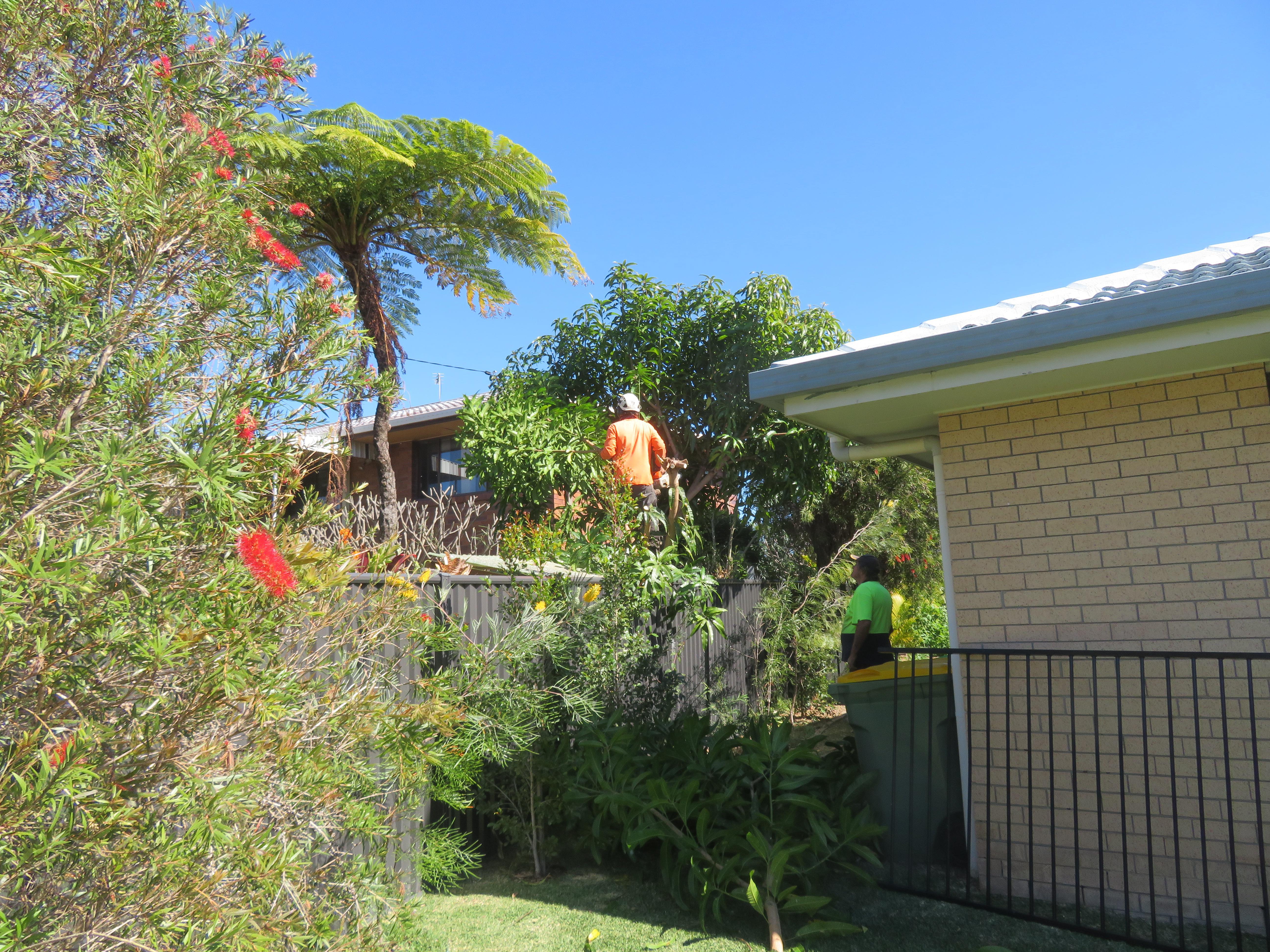 big jim pruning trees august flowers 004_5184x3888