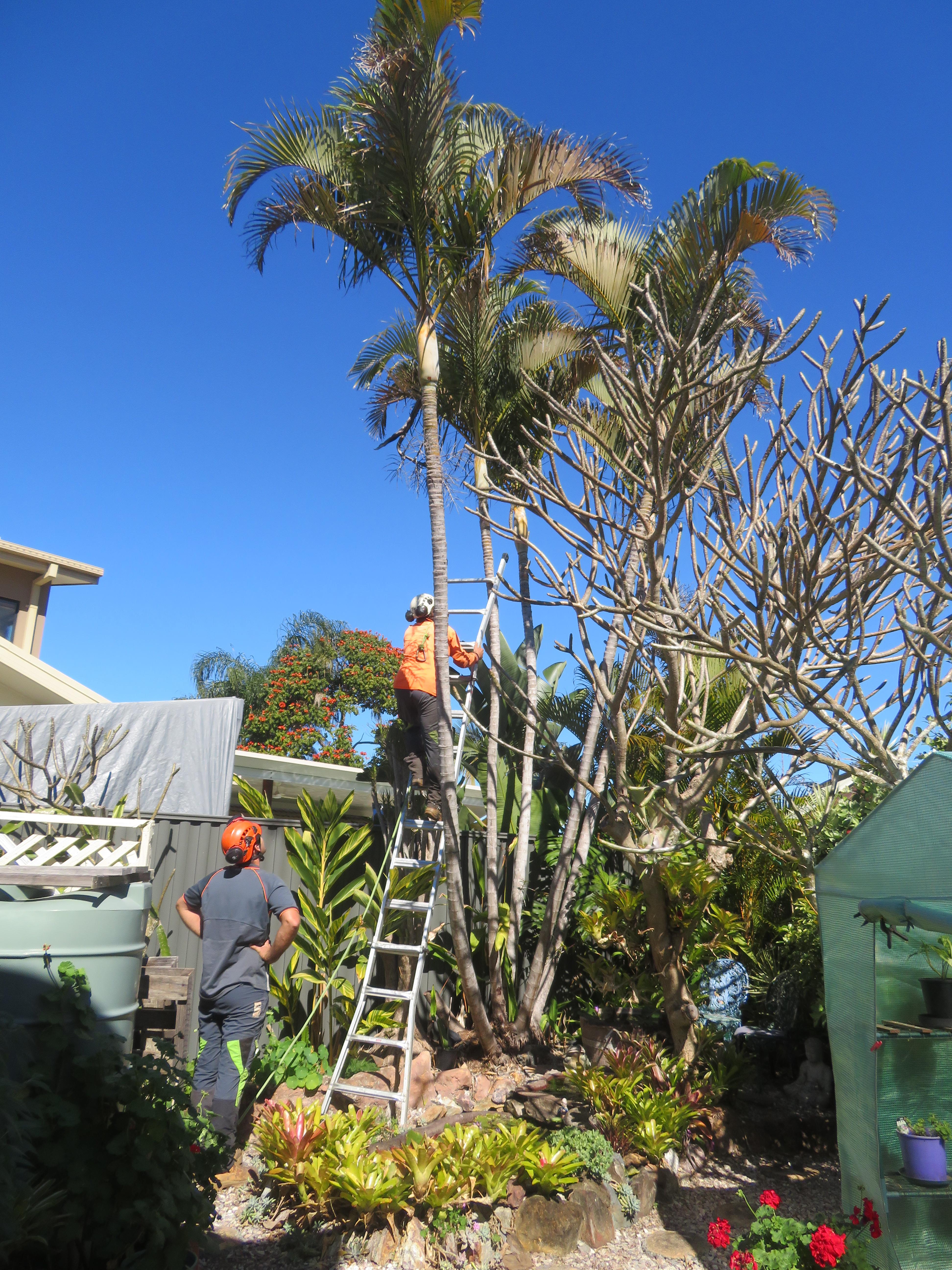 big jim pruning trees august flowers 008_3888x5184