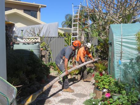big jim pruning trees august flowers 022_5184x3888