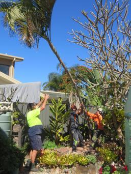 big jim pruning trees august flowers 028_3888x5184