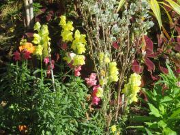 big jim pruning trees august flowers 049_5184x3888