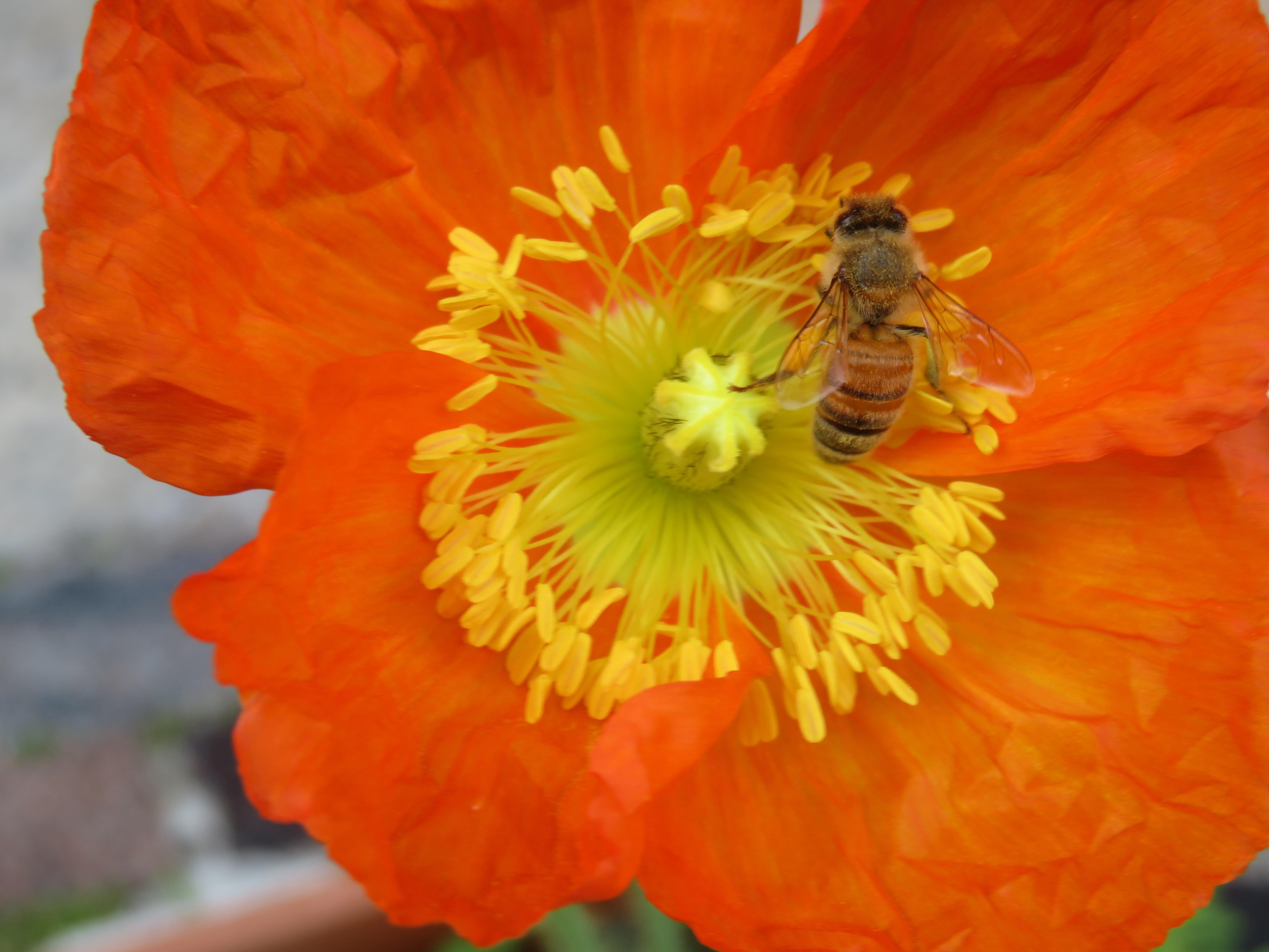 garden mid august 028_5184x3888