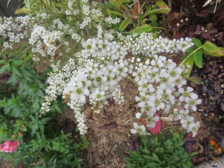 garden mid august 032_5184x3888