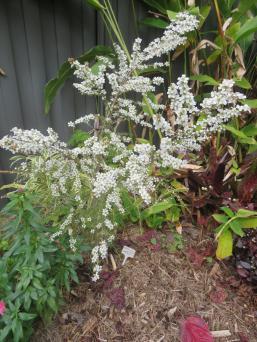 garden mid august 033_3888x5184