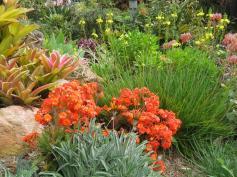 garden mid august 037_5184x3888