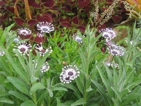 garden mid august 038_5184x3888
