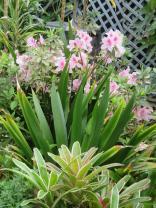 garden mid august 048_3888x5184