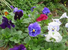 garden mid august 049_5184x3888