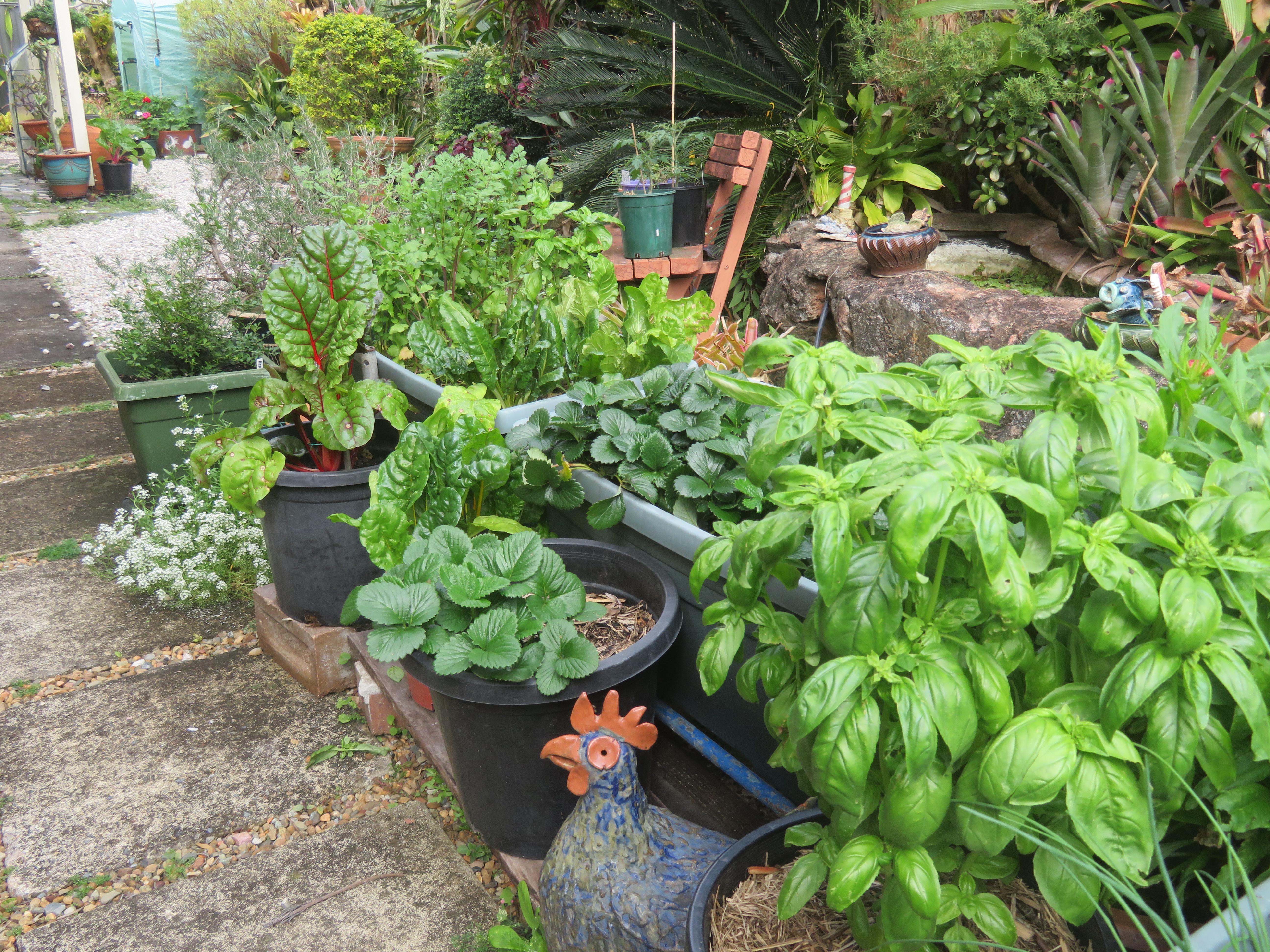 garden mid august 058_5184x3888