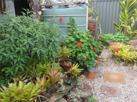 garden mid august 061_5184x3888
