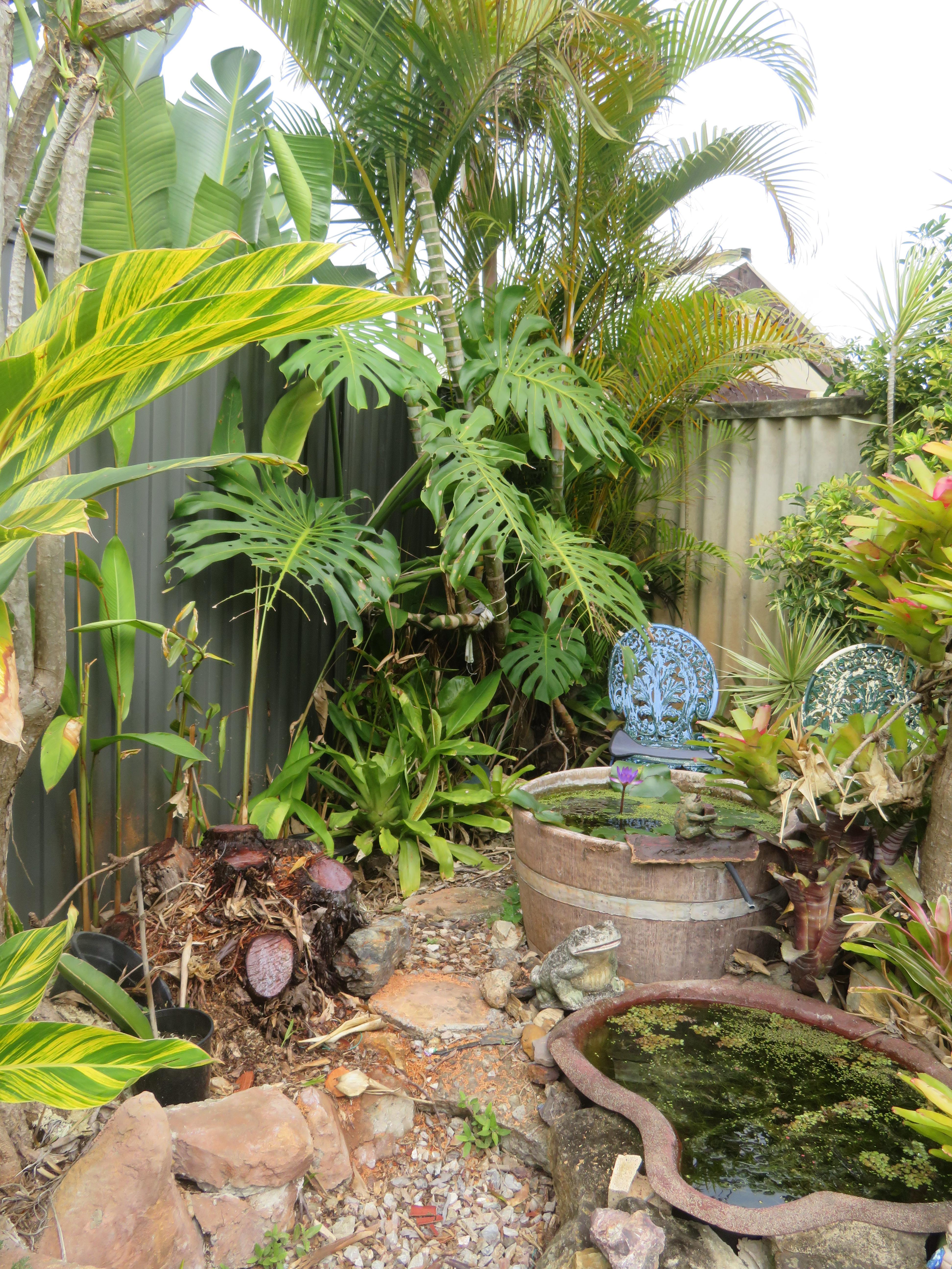 garden mid august 064_3888x5184