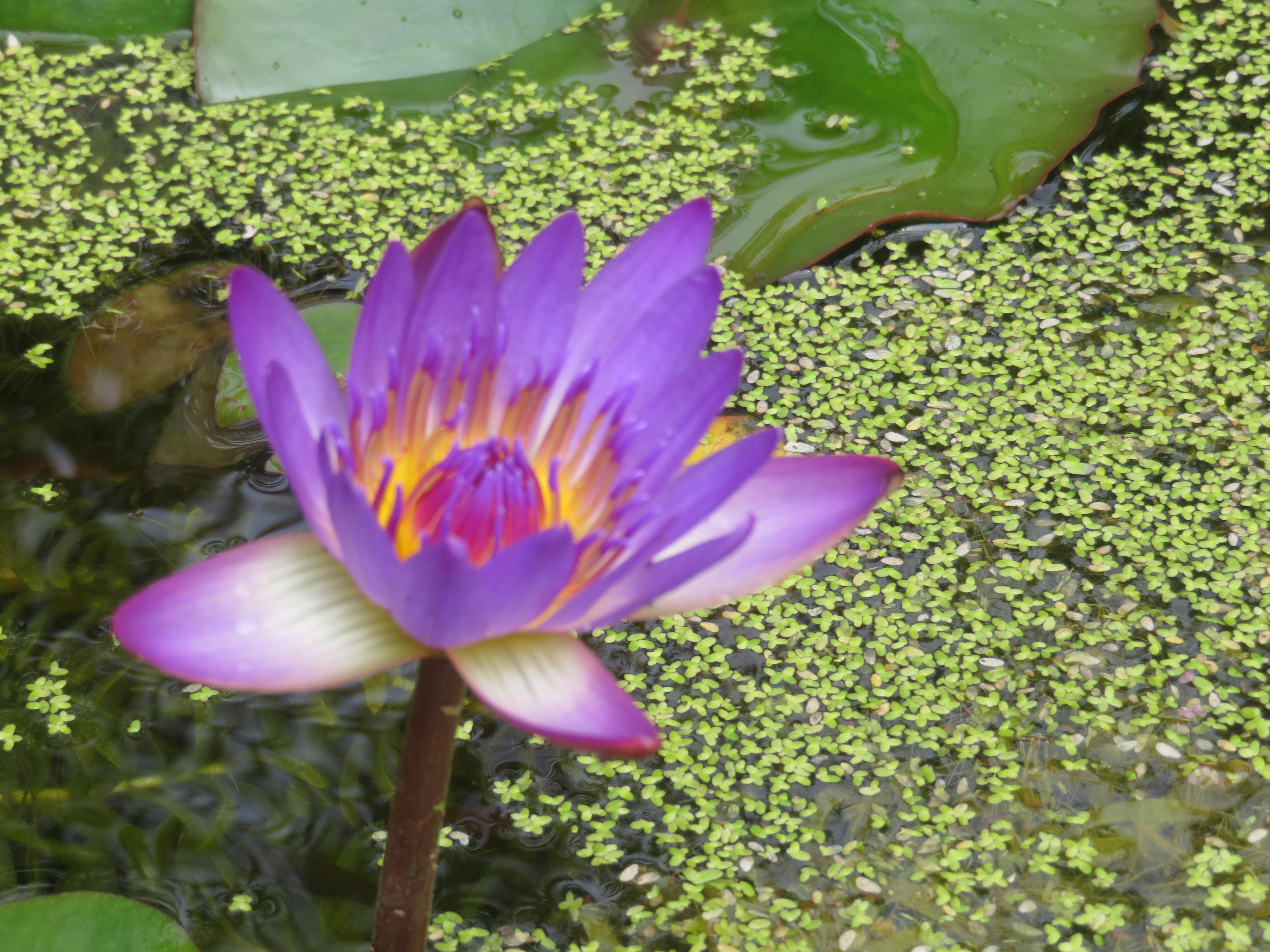 garden mid august 067_5184x3888